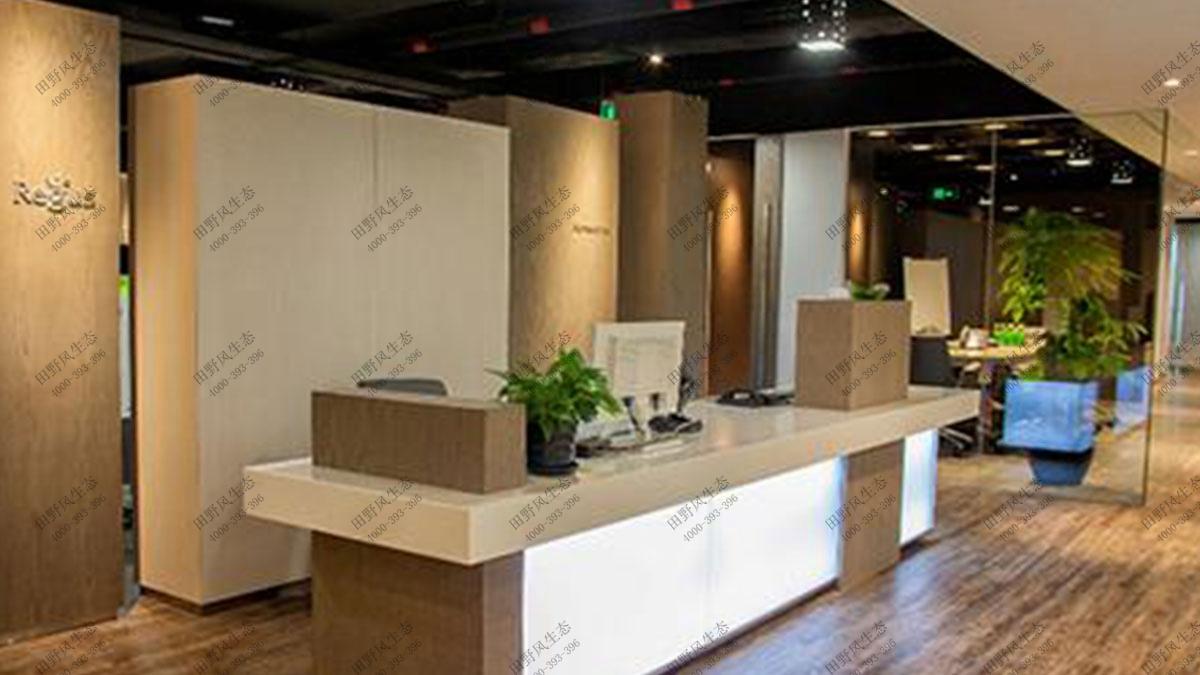 办公室植物租赁,办公室植物租摆