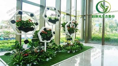 室内植物租摆如何选择效果最佳?