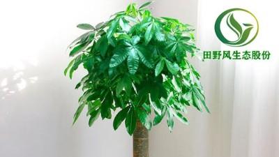 以下几种绿植,绝对能帮您摆脱沉闷的环境!
