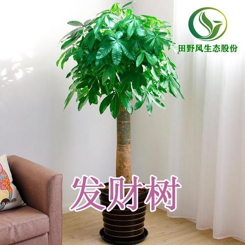 绿植租摆,植物租赁