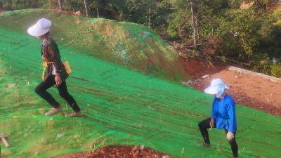 边坡复绿挂三维网