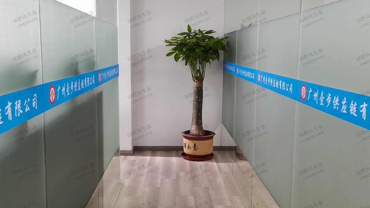 公司走廊绿植租摆