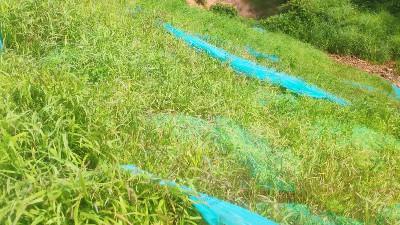 边坡复绿效果实拍
