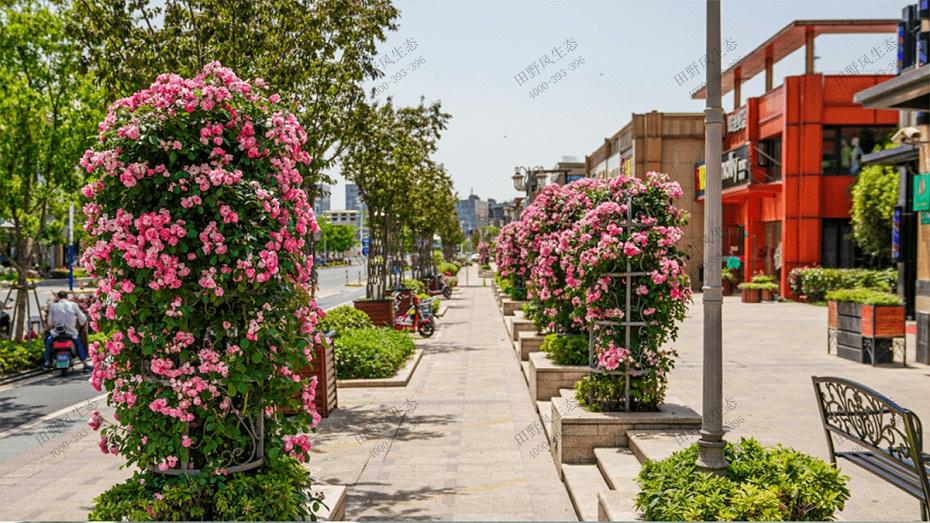 道路绿化养护方案,道路两侧绿化养护