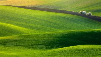 草坪草种分类详解