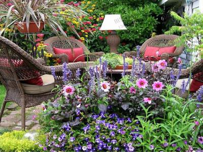 一年四季开花的花种子,你家院子种了吗?