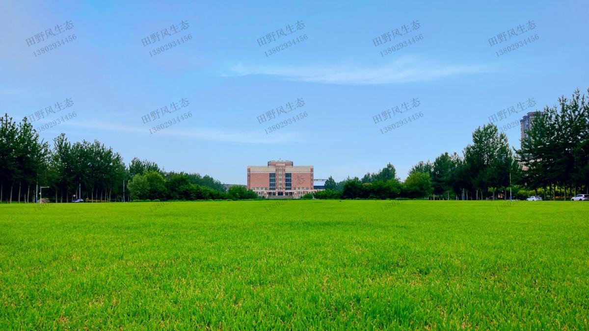 草坪草种成坪效果