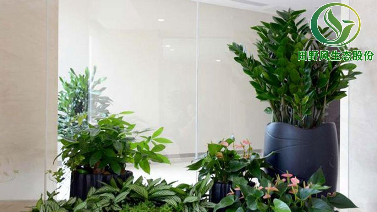 绿植花卉出租,植物养护