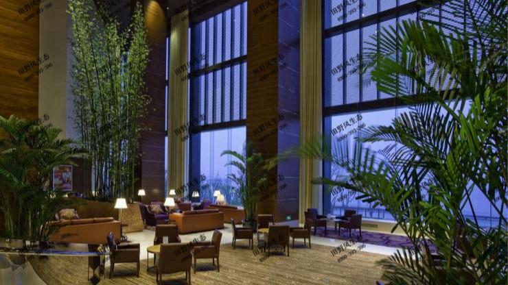 广东迎宾馆绿植花卉租赁案例