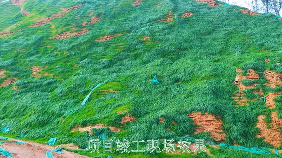 广东省高州市山体滑坡边坡复绿