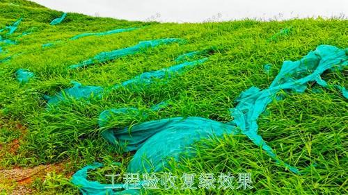 广西百色山体滑坡生态修复工程
