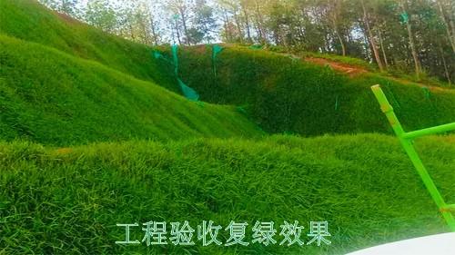 广西梧州山体滑坡地灾边坡绿化