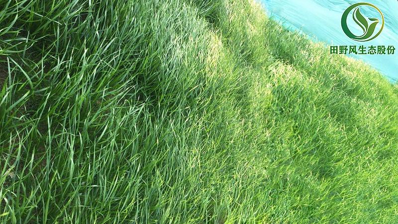客土喷播,边坡复绿