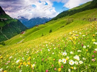 护坡野花组合