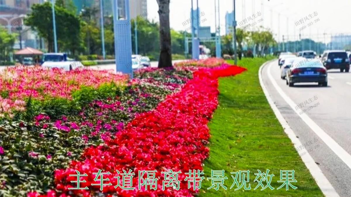 广东珠海斗门美化绿化市政工程