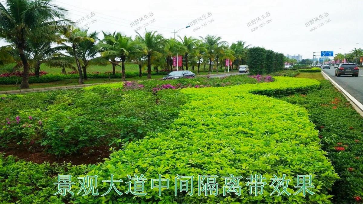 广东珠海斗门湿地公园市政工程