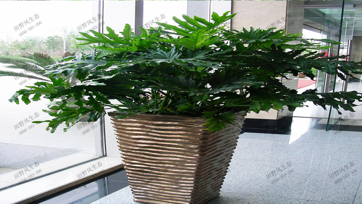 中型花卉植物品种