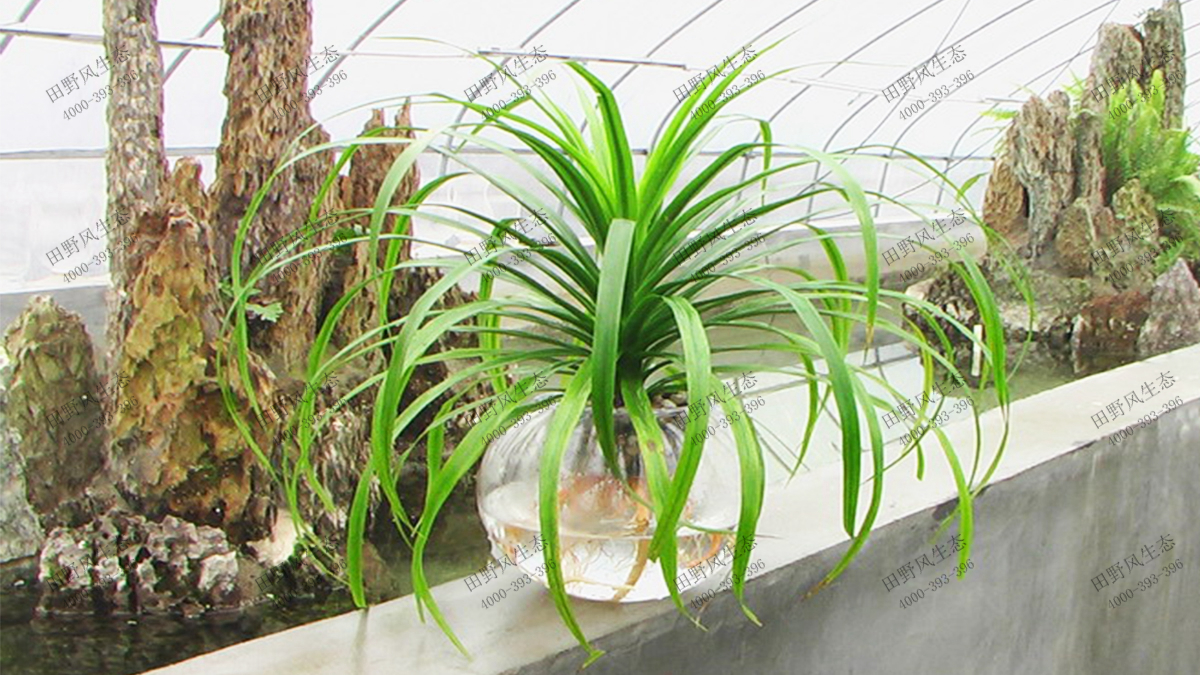 微型花卉植物品种