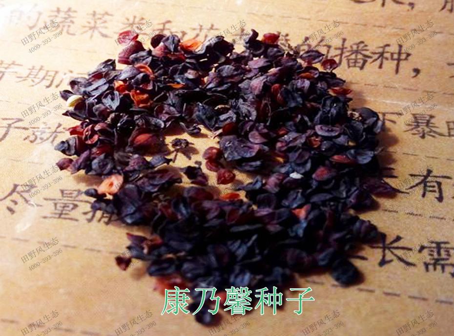 1康乃馨种子