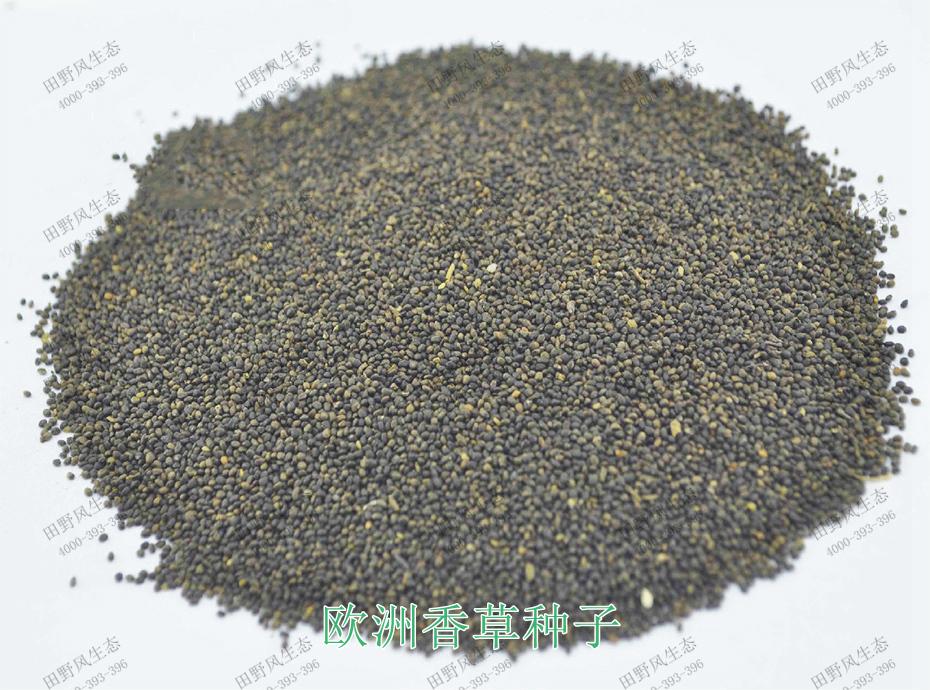 1欧洲香草种子