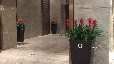 广东国际大酒店绿植出租案例