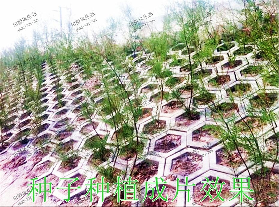 5种子种植成片效果