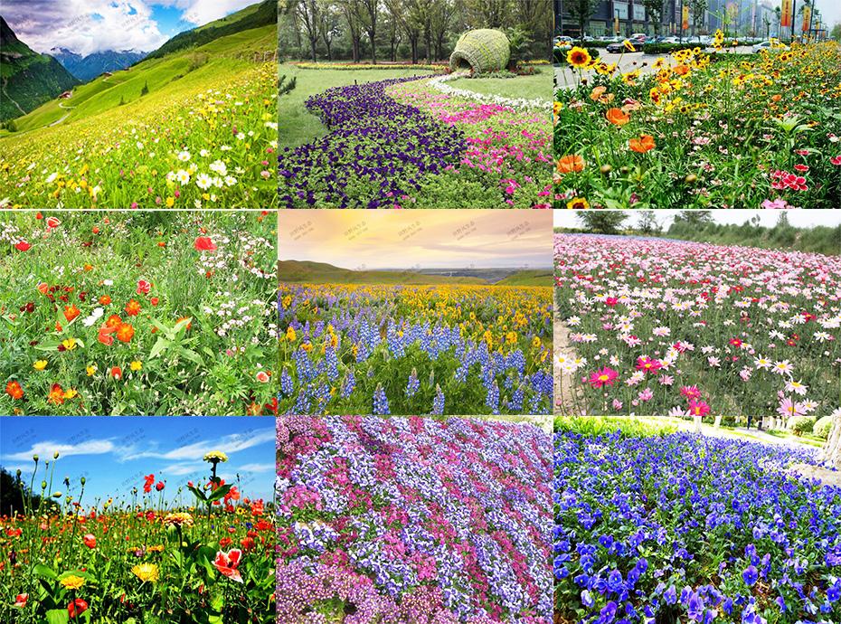 景观组合花种9图