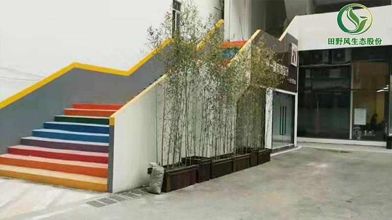 植物租赁,绿植租赁