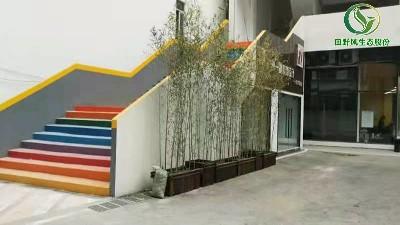 田野风植物租赁,感谢投资开发公司客户信赖!