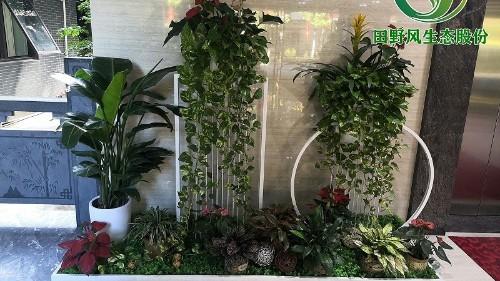 公司前厅植物租赁方案