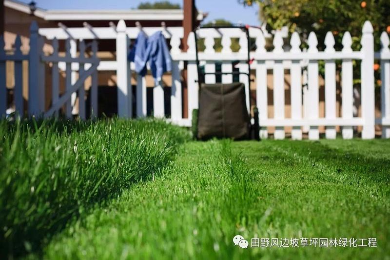 草坪绿化,防除特殊杂草
