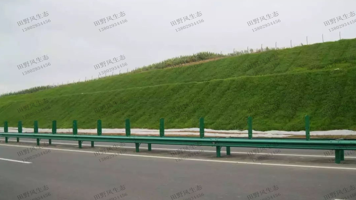 护坡绿化草种