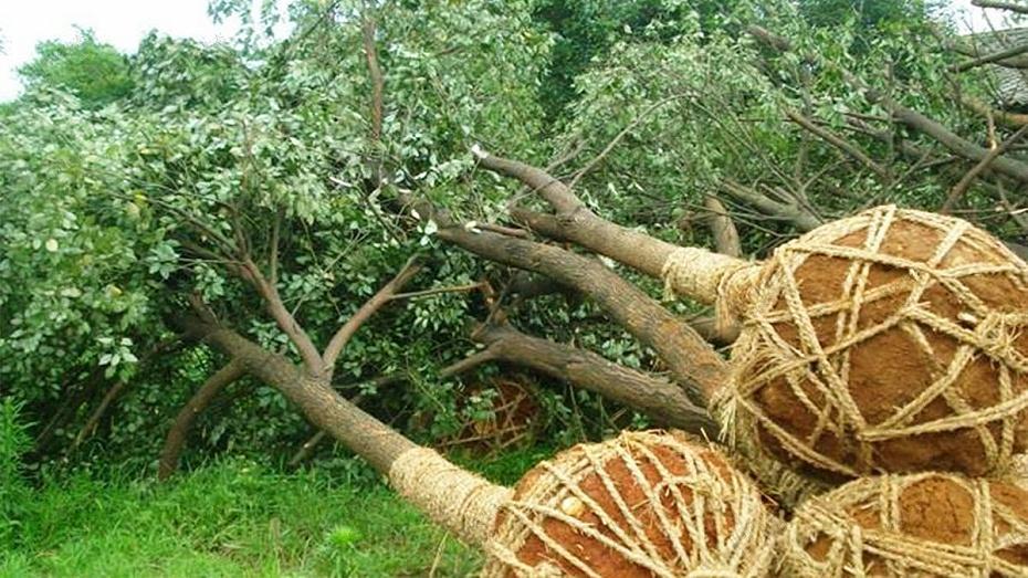 室外树木移植