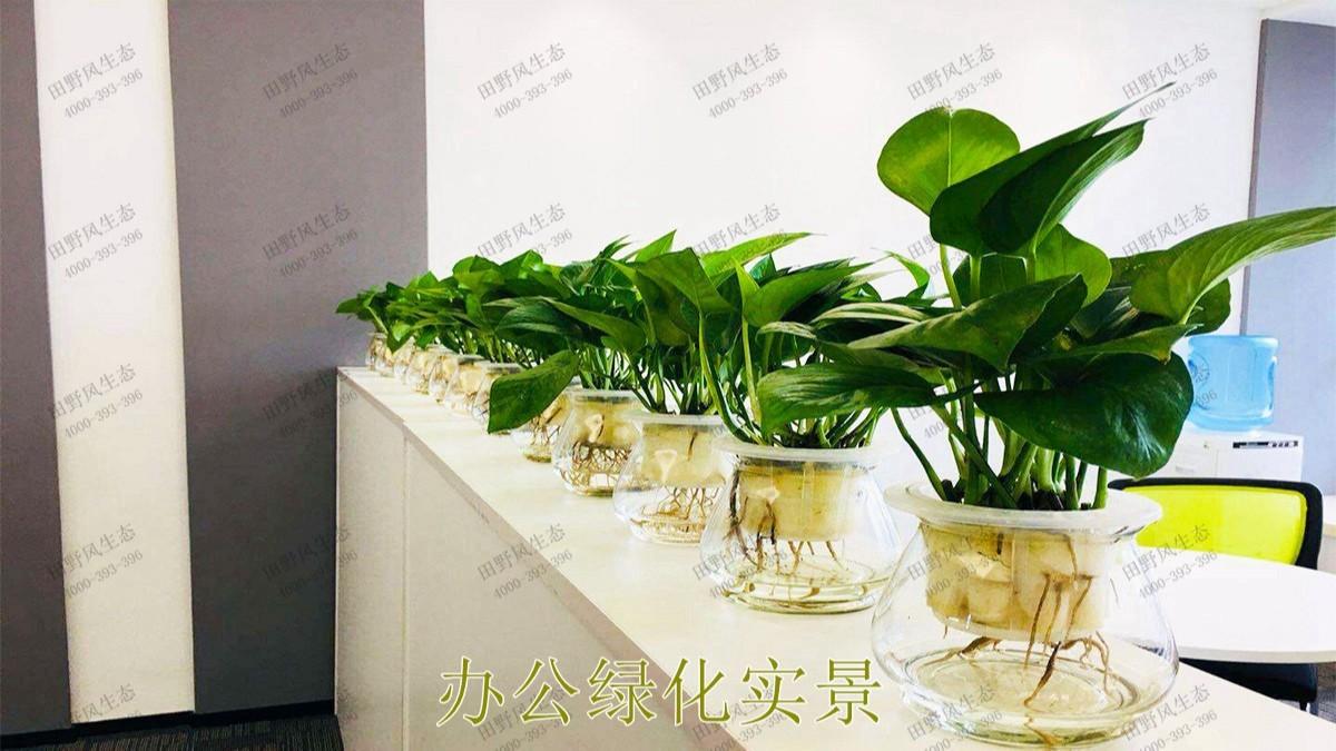 广东省人民医院绿植租摆合作案例展示