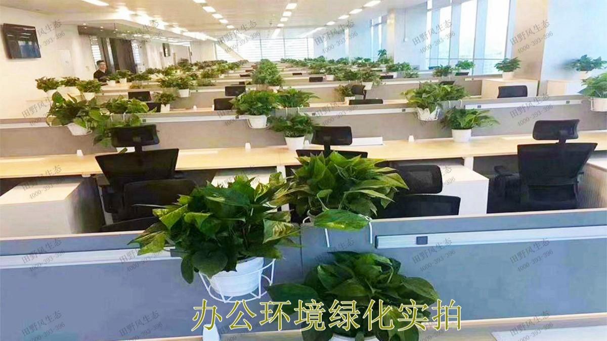 无限极绿植花卉景观租赁案例展示
