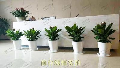 花卉植物租摆,广东省交通运输建设工程质量检测中心