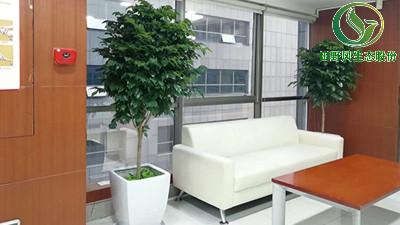 田野风公司,给你不一样的办公室绿植租摆摆放技巧