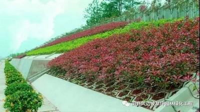 边坡绿化这样做效果最好