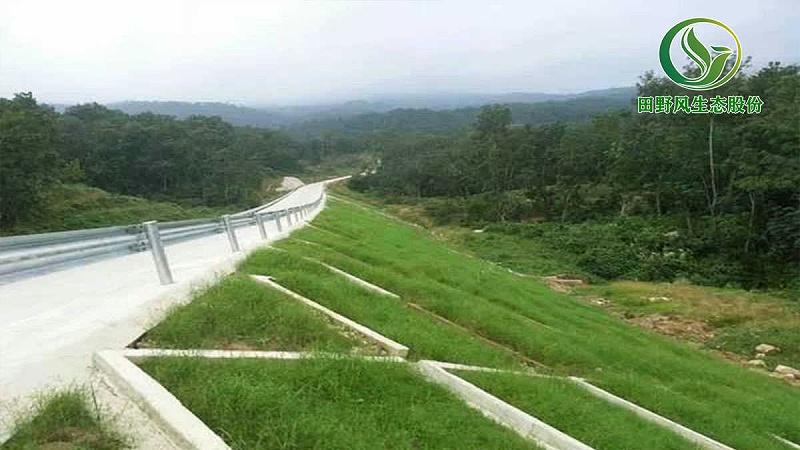 生态修复工程