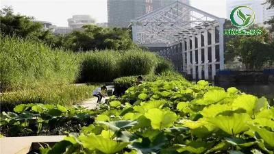 别墅庭院草坪应该如何养护?