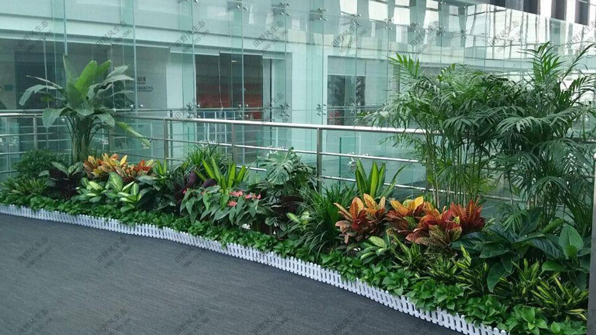 商场植物花卉组合租摆,植物租摆