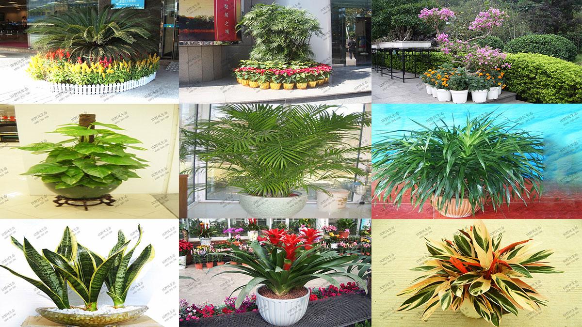 花卉植物品种