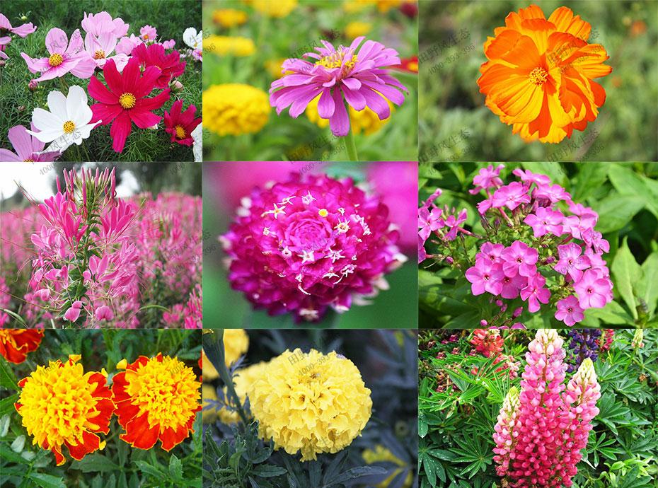 花卉种子单品