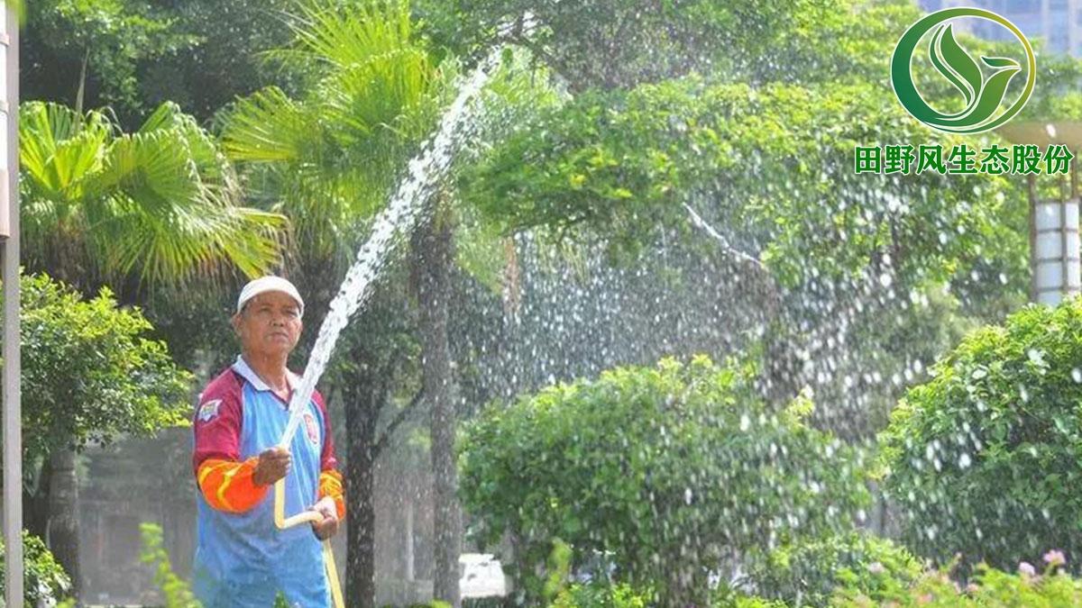 绿化养护, 树木养护