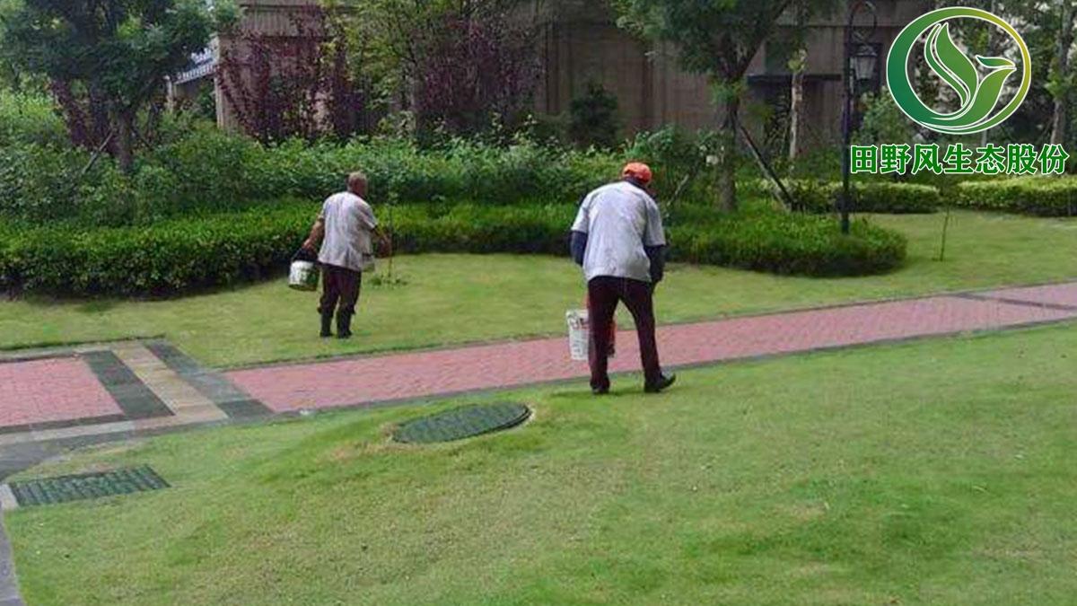 广州绿化养护,园林绿化