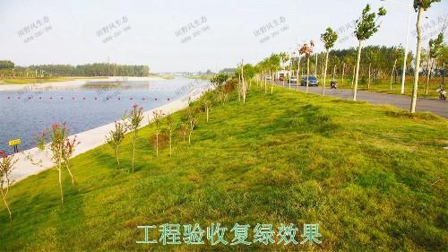 仁化县董塘河道生态治理工程