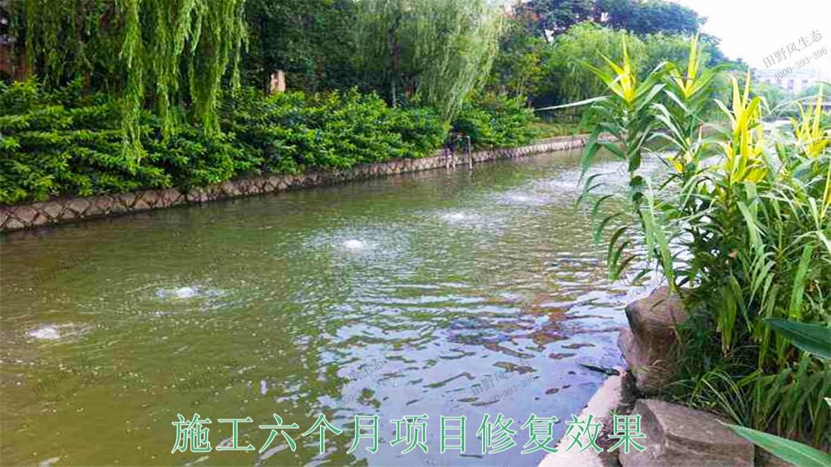 广宁县和漫水河道湖泊护坡绿化