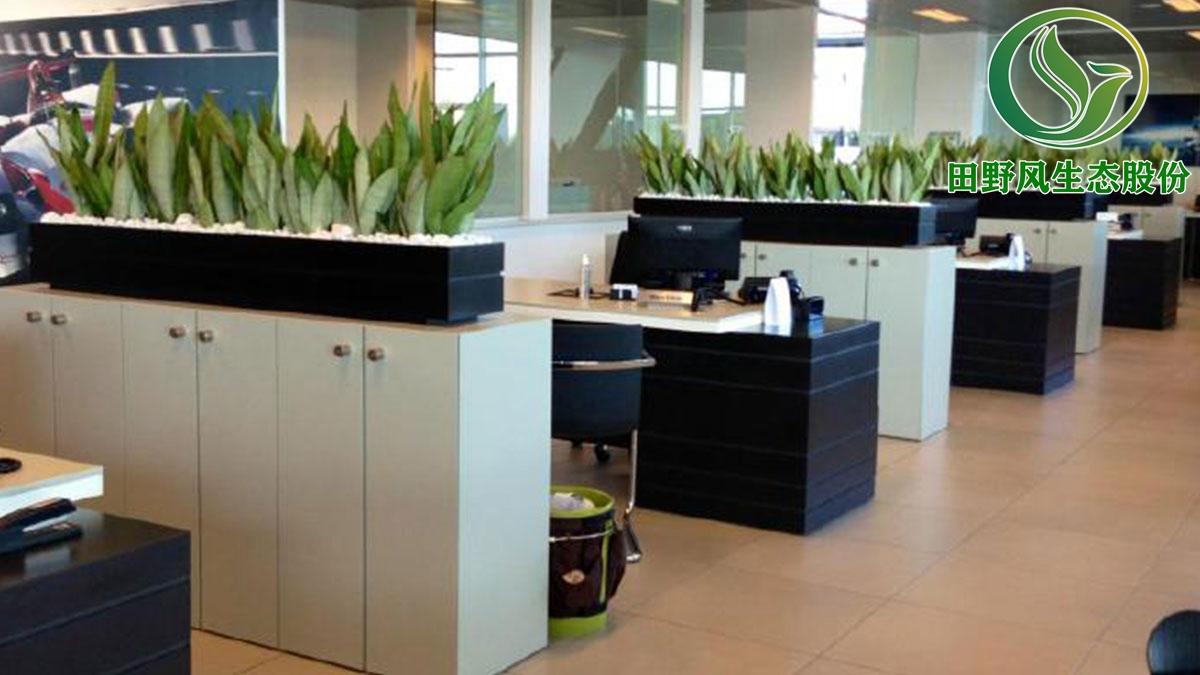 广州办公室绿植租摆,盆栽花卉植物租赁