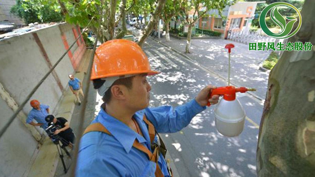广州市白云区绿化养护,园林绿化
