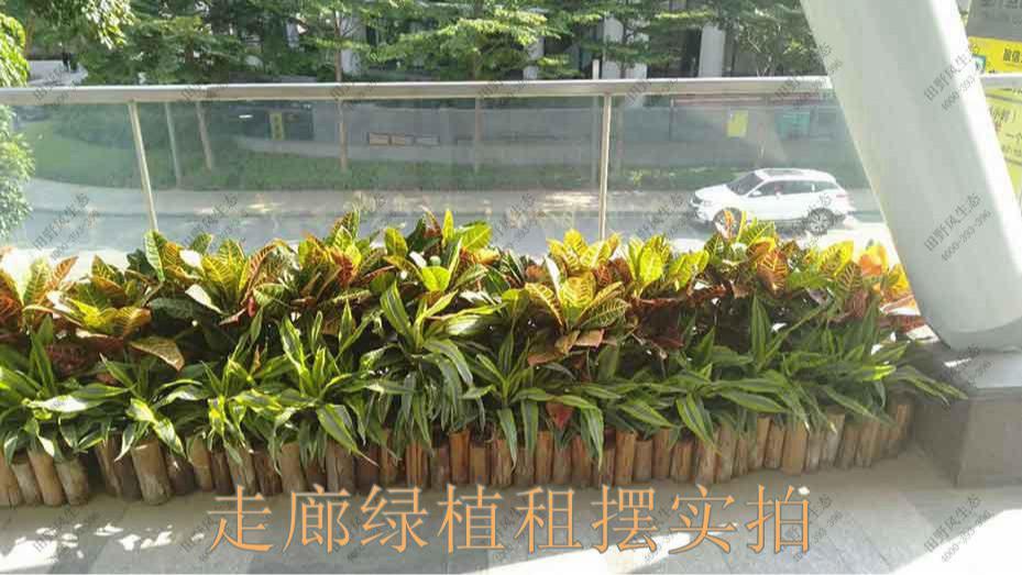 广州凯华国际中心绿植出租案例